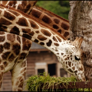 Zoo safari
