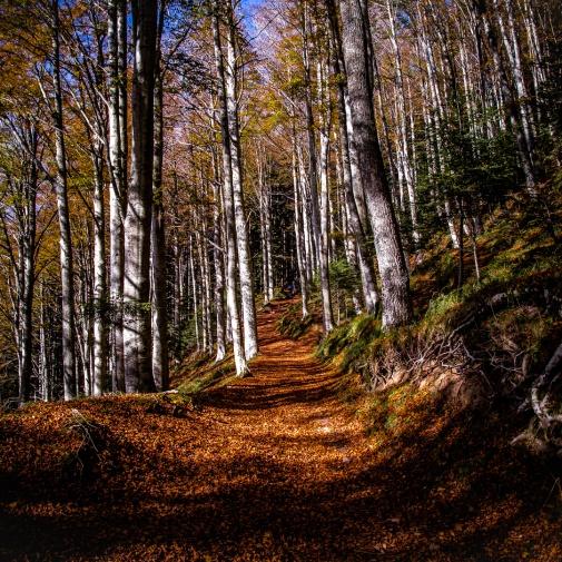 Festival del Fall Foliage Nel  Parco Nazionale delle Foreste Casentinesi